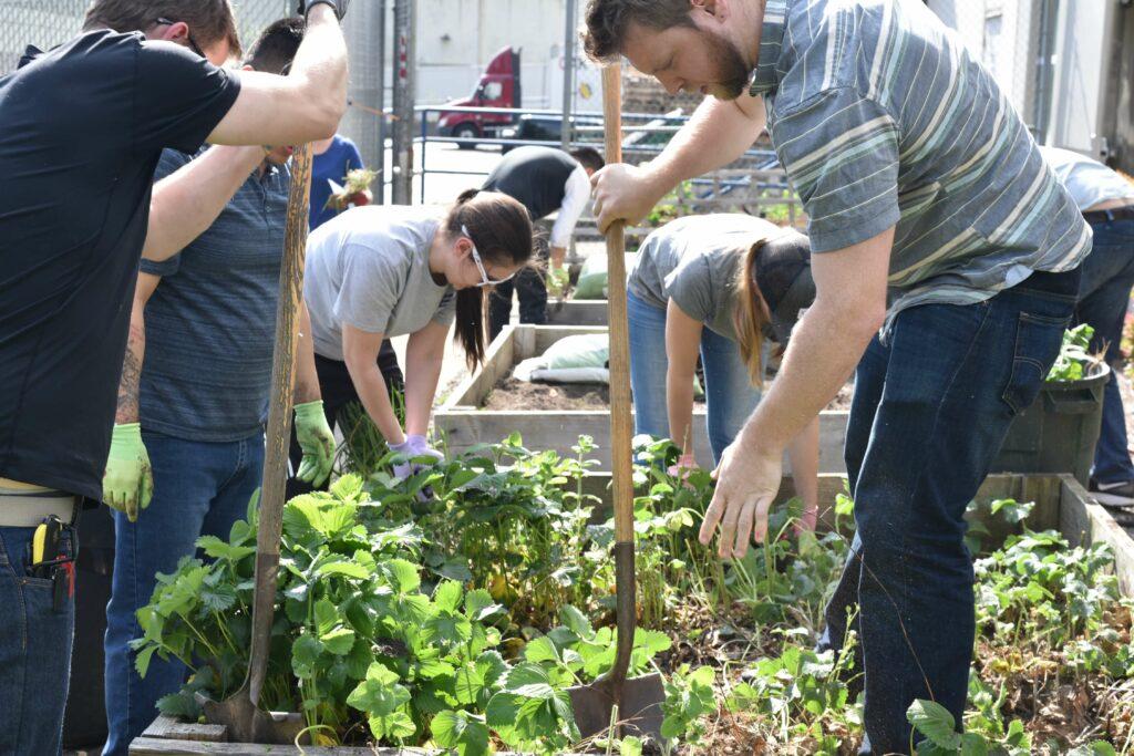Several people gardening